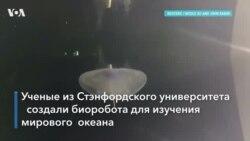 Медуза-киборг
