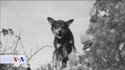 Pas - heroj odlikovan nakon 70 godina