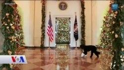 Beyaz Saray'ın Dört Ayaklı Sakinleri