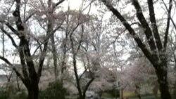 SAD: Kenwood je prvih dana aprila nešto posebno