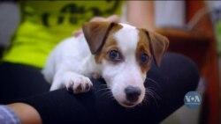 Повернення до офісів і стрес для домашніх тварин: як їм допомогти. Відео