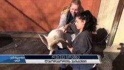 არლინგტონში სკოლის მოსწავლეები ცხოველებს უვლიან