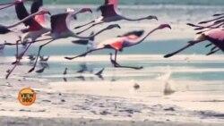 پاکستان میں مہاجر پرندوں کو لاحق خطرات