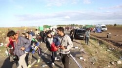 Hungarian Police Struggle to Control Refugee Influx at Serbian Border