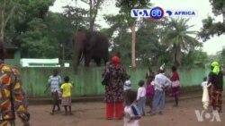Manchetes Africanas 17 Setembro 2014