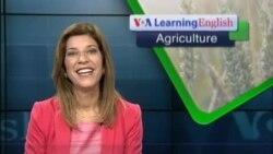 Biofortified Grain Fights Iron Deficiency