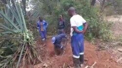 Chawatama Marimo Catching Python ...