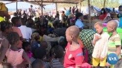Guerra e tráfico de madeira em Cabo Delgado