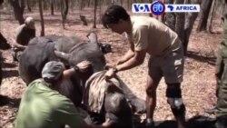 "Manchetes Africanas 7 Setembro 2016 - Gabão, ainda as presidenciais, Rinocerontes do Zimbabue menos ""apetecíveis"