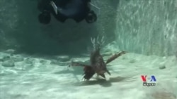 Underwater Robot Fights Invasive Species