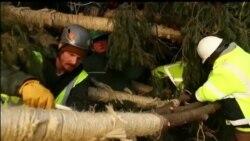 Čuveno božićno drvo stiglo u New York
