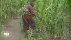 Un après les cyclones, les Mozambicains toujours en attente de l'aide promise