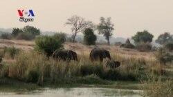 Zimbabwe Translocates Elephants to Ease Congestion