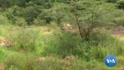 Impacto do COVID-19 na defesa de animais em África
