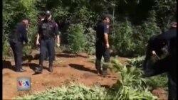 Operacionet anti-drogë në Dukagjin