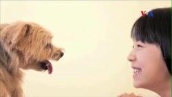 Giao tiếp bằng ánh mắt khiến người và chó thêm gần gũi