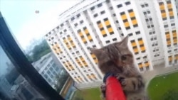 Dramatic Rescue of Kitten in Singapore