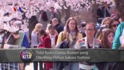 VOA Dunia Kita: Festival Sakura di Washington DC (1)