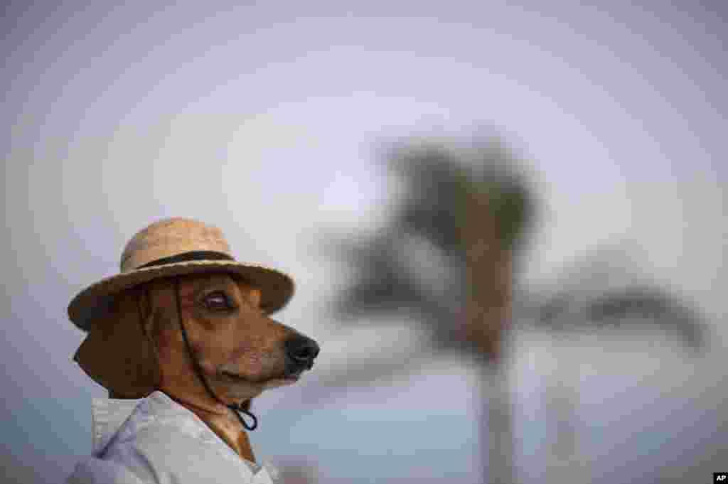 A dog named Caique wears a hat and shirt on Arpoador beach in Rio de Janeiro, Brazil, Jan. 18, 2014.