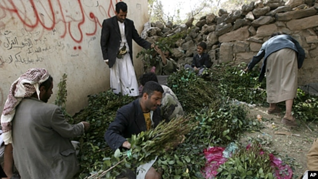 Vendors prepare qat for customers at a qat market, in the Yemeni capital Sana'a. Qat, which is popular with many Yemeni adults, is a leaf that gives a mild narcotic high when chewed. (file photo)
