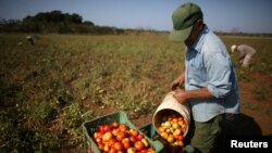 Kubanski poljoprivrednici