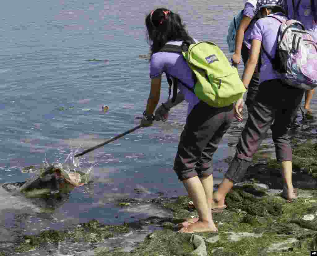 A student collects waste as she joins other environmental activists in a coastal cleanup along the shores of Freedom Island to mark World Earth Day, in Las Pinas, south of Manila, Philippines, April 22, 2015.