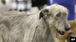 Posao šetačice pasa: unosan, zabavan, ali ne i 'uredan'