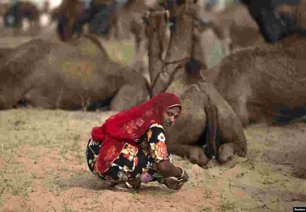پشکر بھارت کے رنگا رنگ مویشیوں کے میلے کے طور پر بھی جانا جاتا ہے۔