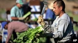 El decreto beneficiará a unos cinco millones de inmigrantes, según la Casa Blanca.