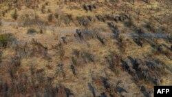 Les éléphants errent dans les plaines du district de Chobe, en Ouganda, le 19 septembre 2018.
