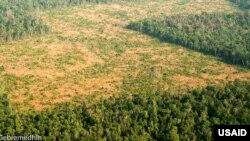 """Cambodia's forests are """"globally important for biodiversity conservation."""""""