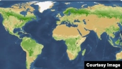 A map provided by Yale University shows the density of trees worldwide.
