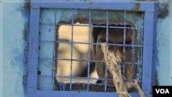 Salah seorang tahanan melihat melalui jendela pada penjara utama di kota Kandahar, Afghanistan selatan (foto: dok). NATO mengentikan sementara pengalihan pengawasan penjara karena adanya laporan terjadi penyiksaan tahanan.