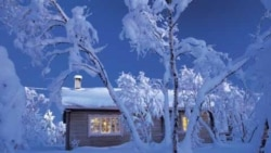 snow covered cottage with trees around