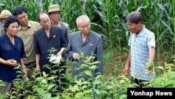 지난 7월 북한 평양시 사동구역의 오류남새전문협동농장을 방문한 최영림 내각 총리(오른쪽 2번째).