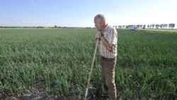 Farmer Winfried Rothermel in his onion field in western Germany last month