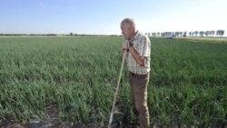 A farmer in his onion field in western Germany
