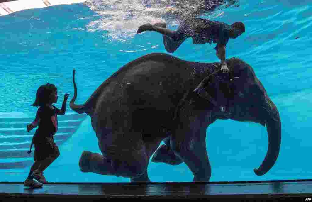 Seorang anak perempuan menonton Saen Dao, seekor gajah betina berusia 8 tahun dan pawangnya melakukan pertunjukan di dalam air di kebun binatang di Chonburi, Bangkok selatan.