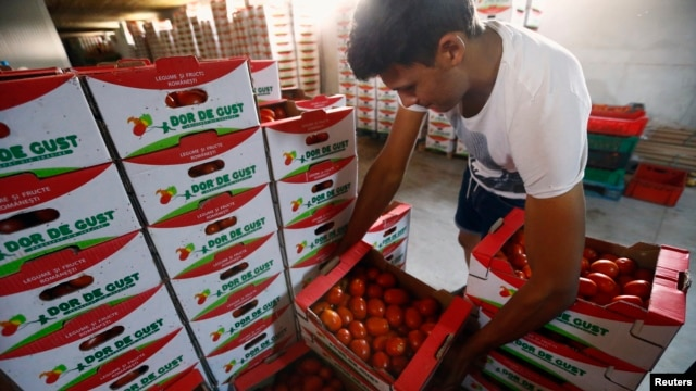 A worker arranges boxes of tomatoes at a warehouse near Alexandria, southern Romania, Aug. 20, 2014.