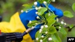 Chuyện dùng thuốc trừ sâu có organophosphate là chuyện rất phổ biến tại các quốc gia đang phát triển