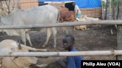 Some children in South Sudan are saying 'no' to working at cattle camps, like this one at Nimule.