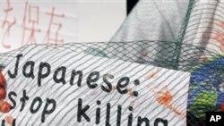 環保人士九月十六日在義大利米蘭抗議日本捕鯨作業