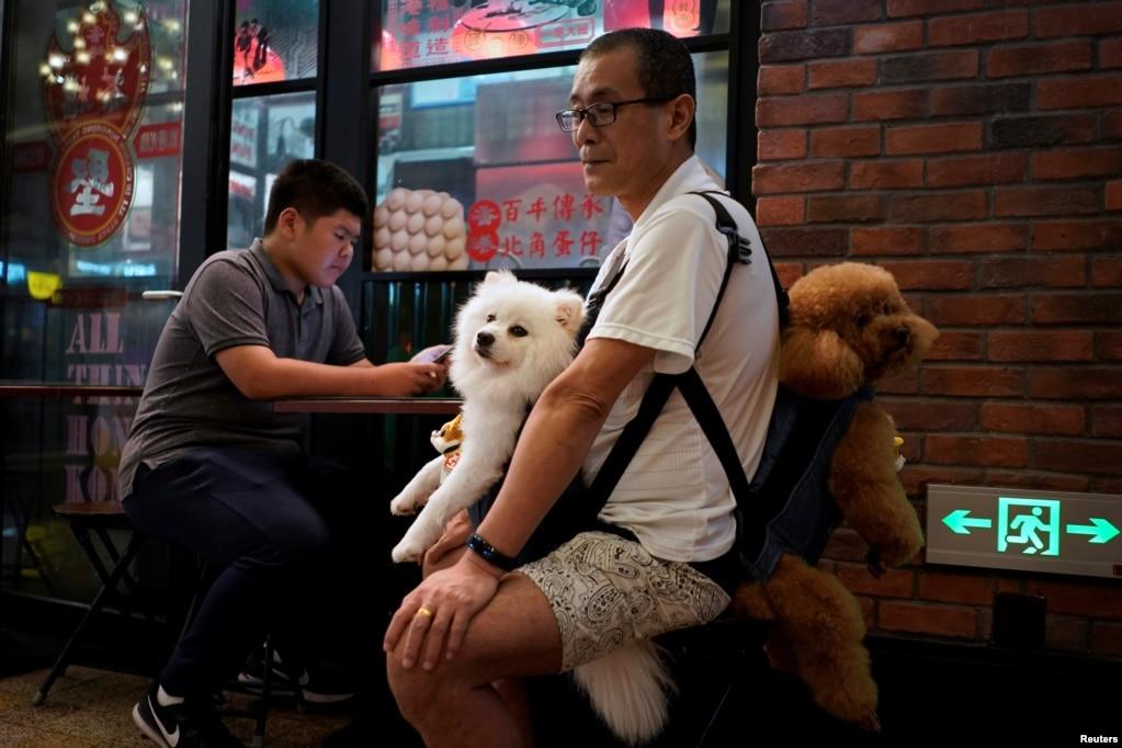 2018年6月21日在中國上海的一個街頭市場上,一名男子攜帶兩隻狗。