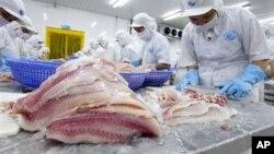 Công nhân Việt nam làm việc trong nhà máy chế biến cá xuất khẩu