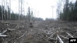 Химкинский лес: борьба продолжается