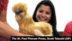 Petting Animals from University of Minnesota