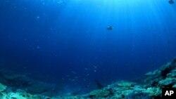 Un nuevo mapa del fondo del mar revela secretos inesperados.