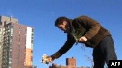 Нью-йоркское новшество: сады на крыше