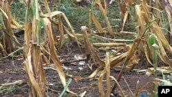 """Os subsídios, """"não devem ser permanentes"""", mas o objectivo de aumentar a produtividade é prejudicado por a agricultura moçambicana ser de subsistência."""