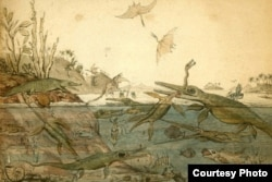 Old English watercolor painting of dinosaurs.
